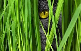 ungiftige pflanzen für katzen worauf du achten solltest