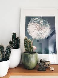 kakteen findet bei uns überall kaktus badezi