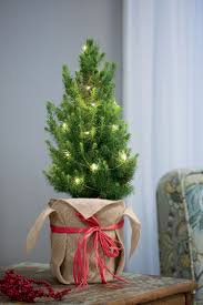Prelit Christmas Tree That Puts Itself by Tabletop Christmas Tree Living Spruce With Lights Gardeners Com