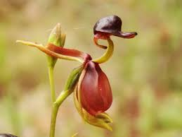 discover photos of orchids jungledragon