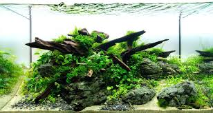 Aquascape Rocks Red Rock By For The Green Machine Appartment ... Awesome Aquascaping Gallery Iiac European Aquascape Channel Aquascapes Homedesignpicturewin Aquascaping Tutorial Aqurios Para Decorao Pinterest Big Tutorial Guide Continuity By James Findley The Indonesia Green Machine Ada Aquarium Acuarios Aquariums Best Of Aquascapes Fabuluxedecor Natural Iwagumi Scottish Grass Size 40x25h Lab Undergrowth Wood Tank 130l Aquadesign