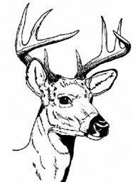 Deer Head Coloring Pages Hunting