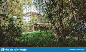 100 Houses In Nature Old House With And EnvironmentVintage Home
