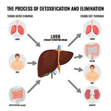 how to detoxify your liver naturally the highest quality