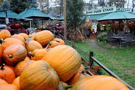 Jolly Pumpkin Dexter by Township Seeks To Shut Jenny U0027s Dexter Market Following Accident