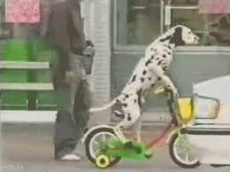 Dalmatian Riding Bike