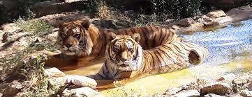 tarifs horaires zoo fauverie du mont faron