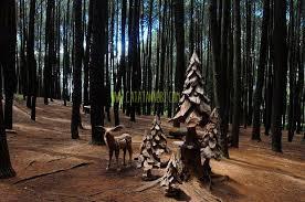 Yuk Pagi Ke Hutan Pinus Mangunan