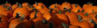Pumpkin Patches Maryland Heights Mo by Relleke Pumpkin Patch