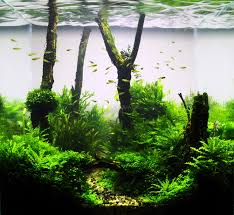 Aquascape Patio Pond Australia by 144 Best Aquascaping And Planted Tanks Images On Pinterest