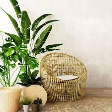 pflanzen fürs wohnzimmer die besten tipps für euren indoor