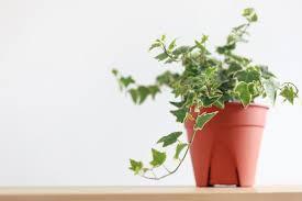 gesundes raumklima optimale pflanzen für jeden raum
