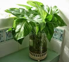 Good Plants For Bathroom by Articles With Plants For Bathrooms Nz Tag Plants For Bathroom Photo