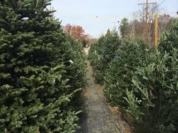 Leyland Cypress Christmas Tree Growers by Christmas Tree Lot Richmond Va Fresh Wreaths Cross Creek