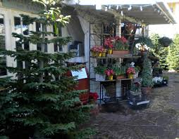 Fraser Fir Christmas Trees For Sale by An Urban Cottage A Different Tree