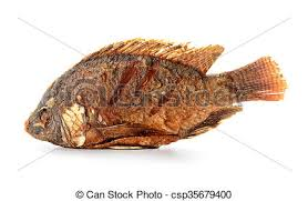 Fried Tilapia Fish Isolated On White Background