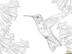Ruby Throated Hummingbird Coloring Pages Activity Sheets Colouring Pictures Printable Images