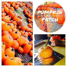 Miami Lakes Church Pumpkin Patch by Photos At Miami Lakes United Methodist Church 14800 Nw 67th Ave
