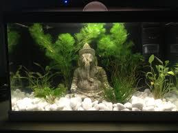 combien de guppy mâle dans un aqua 20l aquariums et vivariums