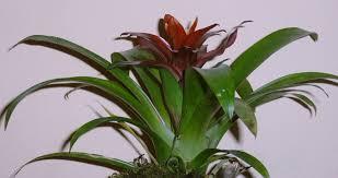 pflanzen fürs bad die besten profi tipps auf einen blick