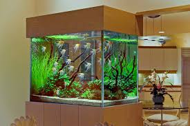 Home Aquarium Design Creative Cheap Aquarium Decoration Ideas Home Design Planning Top Best Fish Tank Living Room Amazing Simple Of With In 30 Youtube Ding Table Renovation Beautiful Gallery Interior Feng Shui New Custom Bespoke Designer Tanks 40 2016 Emejing Good Coffee Tables For Making The Mural Wonderful Murals Walls Pics Photos