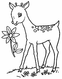 Fawn Coloring Pages