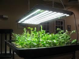 Importance of Grow Lights in Indoor Gardening
