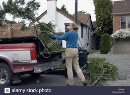 Woman Hauling Tree Branches Pickup Stock Photos & Woman Hauling Tree ...