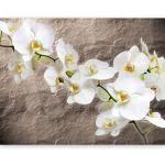 orchideen fototapeten günstig kaufen ladenzeile