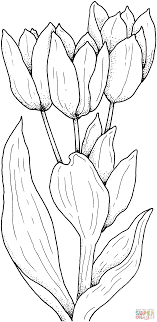 Click The Tulips Flower Coloring Pages To View Printable
