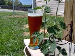 Deschutes Red Chair Clone by To Clone Or Not To Clone Make Beer At Home Forums Brewer U0027s Friend