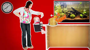 Phil And Teds Poppy High Chair Australia by Phil U0026teds Lobster Portable High Chair Youtube