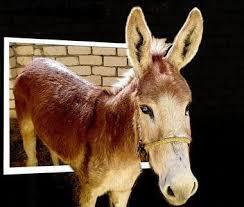صور حمير حمير مضحكة جدا جدا رحلة في عالم الحمير Donkey pictures