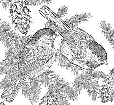 Americas Favorite Birds Picture Gallery For Website Bird Coloring Books