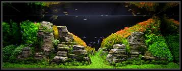 Cuisine: January Aquascape Of The Month Peruvian Nights ... Cuisine Perfect Aquascape Aquarium Designs Ideas With Hd Backyard Design Group Hlight And Shadow Design For Your St Charles Il Aqua We Share Your Passion For Success Classic Series Grande Skimmer Aquascapes Amazoncom 20006 Aquascapepro 100 Submersible Pump Pond Supply Appartment Freshwater Custom 87 Best No Plant Images On Pinterest Ideas