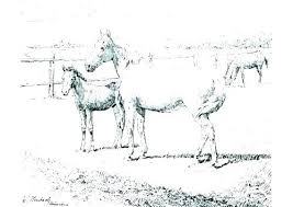 Horse Printable Coloring Pages Free Realistic