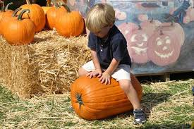 Wheatland California Pumpkin Patch by Gorge On Autumnal Fun And Pie At These Eight Sacramento Area