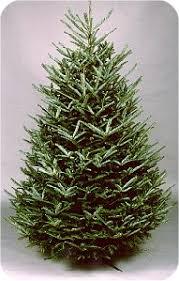Fraser Christmas Tree Care by Fraser Fir