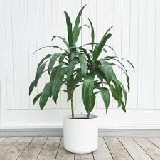 Indoor Garden Tips Littlest Plant Shop