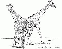 Giraffe Coloring Pages Printable 74168