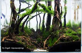 ADA 45P Forest Scape | AquaScaping World Forum Aquascape Of The Month June 2015 Himalayan Forest Aquascaping Interesting Driftwood Placement Aquascapes Pinterest About The Greener Side Aquascaping Design Checklist Planted Tank Forum Simons Blog Decoration Bring Nature Inside Home Ideas Downhill By Arie Raditya Aquarium 258232 Aquaria Creating With Earth Water Fire Air Space New Aquascapemarch 13 2016page 14 Page 8 Aquapetzcom Magical Youtube 386 Best Tank Images On Aquascape