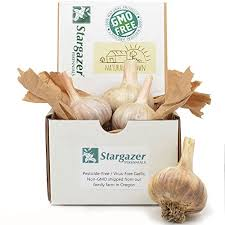 stargazer perennials german hardy gourmet garlic bulbs