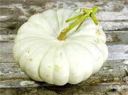 Types Of Pumpkins Grown In Uganda by Flat White Boer Pumpkin Baker Creek Heirloom Seeds