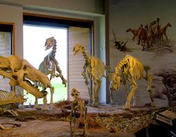 nebraska s agate fossil beds national monument worth a detour kcbx