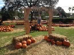 Pumpkin Patch College Station by Events Jax4kids Com