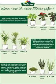 wann muss ich meine pflanze gießen pflanzen