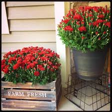 Pinterest Front Door Flower Pots Plants Australia Porch 11 Rustic Metal Bucket And Wood Crate Planters