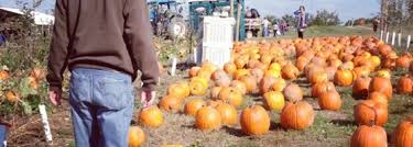 Pumpkin Patch Pittsburgh Pa 2015 by Soergel Orchards Wexford Pa
