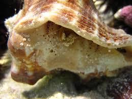 Do Hermit Crabs Shed Their Legs by Tijara Beach Hotel U2013 Exclusive Luxury Beach Retreat In Kenya