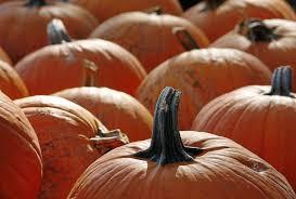 Carmichaels Pumpkin Patch Oklahoma by Find Tulsa U0027s Best Variety Of Pumpkins And Pumpkin Patch Activities